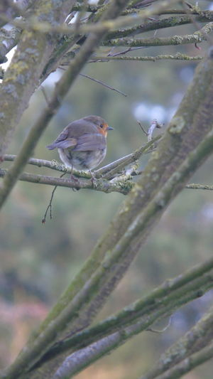 Nature Bird