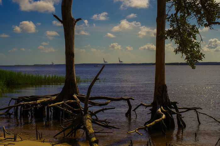 Cape Fear River Carolina Beach State Park Carolina Beach, NC Nature Roots Trees Exposed Roots River North Carolina North Carolina Sky Clouds