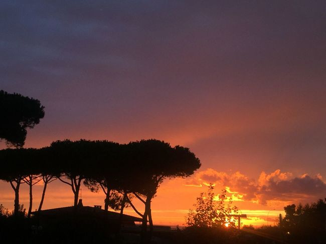 Sunset Versilia  Orange Sky Silhouette Maritime Pines Shades The Week On EyeEm