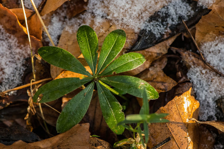 Leaf Plant Part Plant Nature Close-up Beauty In Nature High Angle View Field Leaves Water RainDrop Snow Ice Green Color