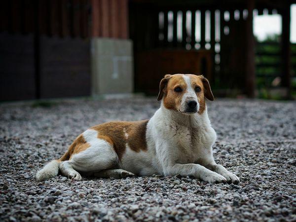 Pies DogLove Dogs Dogslife Dog❤ Dog Love Dog Pet Pets Zwierzęta Psy NEX-5T Sony NEX Sony Nex-5t