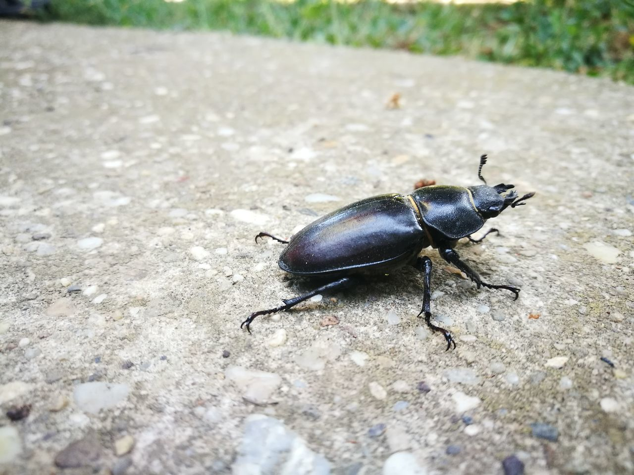 animal themes, one animal, insect, animals in the wild, outdoors, day, close-up, nature, no people