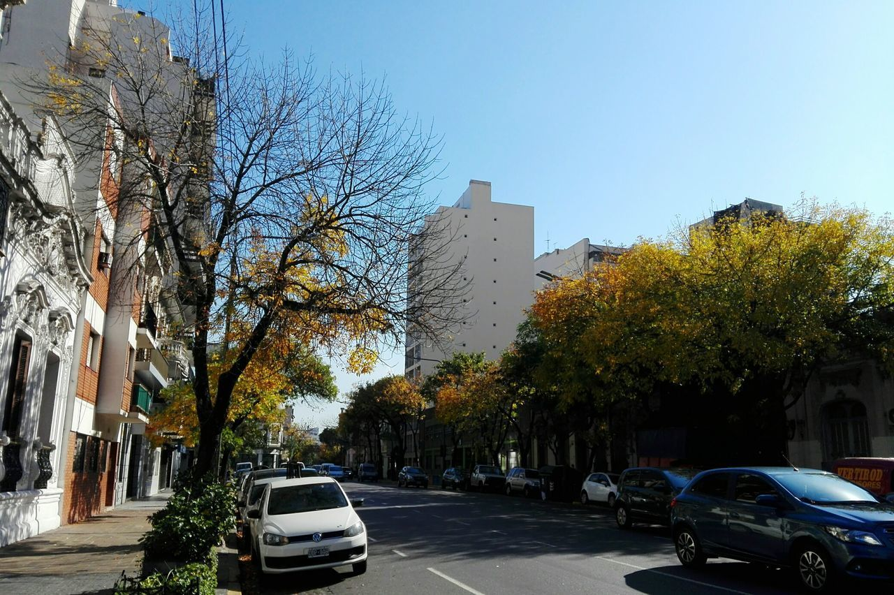 car, tree, architecture, building exterior, land vehicle, transportation, built structure, city, mode of transport, street, outdoors, day, clear sky, road, no people, skyscraper, sky, nature