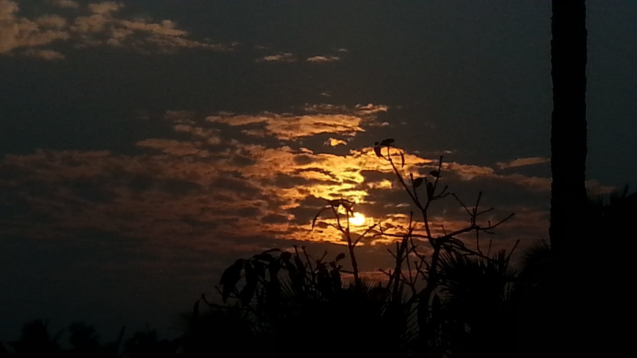 sunset, nature, tree, silhouette, beauty in nature, scenics, tranquility, tranquil scene, sky, no people, outdoors, growth, sun