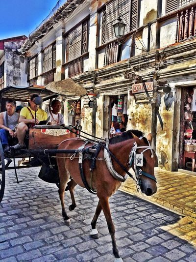 Enjoy a kalesa ride while enjoying the ancient feel of Calle Crisolog, Vigan Ilocos Sur, Philippines More Fun In The Philippines  Vigan