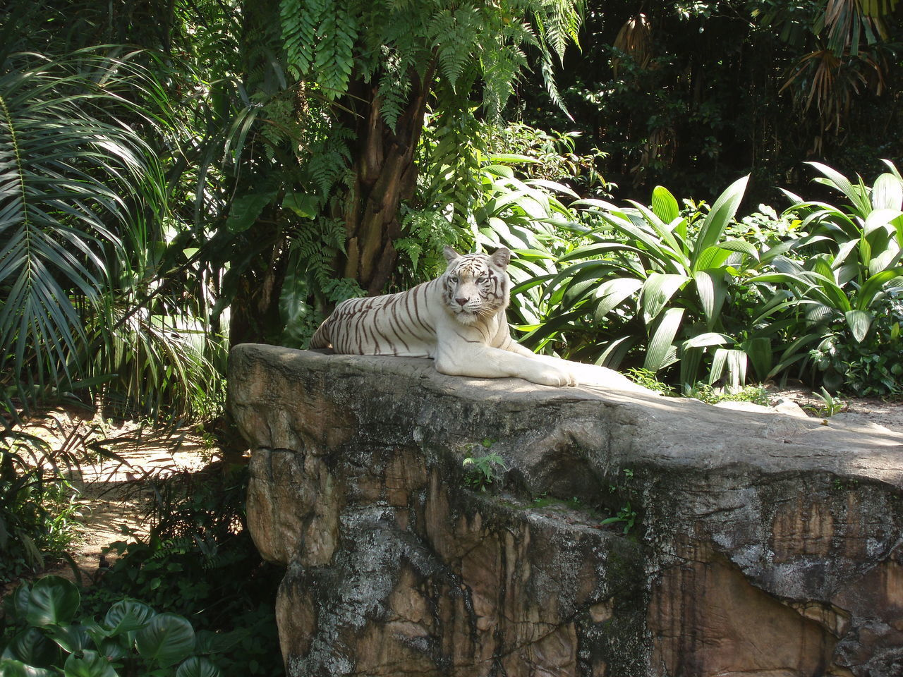 animal themes, one animal, day, mammal, domestic cat, feline, relaxation, outdoors, palm tree, no people, plant, nature, domestic animals, tree, animals in the wild