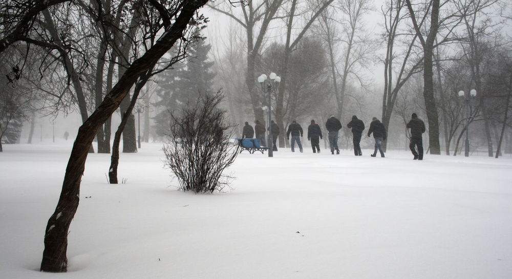Group of men walking along a footpath in a snowy park during a snowfall Along Beauty In Nature Branch Day Fog Footpath Full Length Group Group Of People Men Nature Non-urban Scene Park Person Remote Scenics Snow Covered Snowfall Tranquil Scene Tranquility Tree Tree Trunk Walking Weather