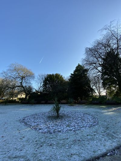Trees on field against clear blue sky during winter