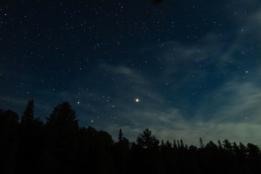 Algonquin Park Algonquinpark Algonquinprovincialpark Astronomy Beauty In Nature Galaxy Growth Low Angle View Nature Night No People Outdoors Scenics Silhouette Sky Space Star - Space Starry Tranquil Scene Tranquility Tree