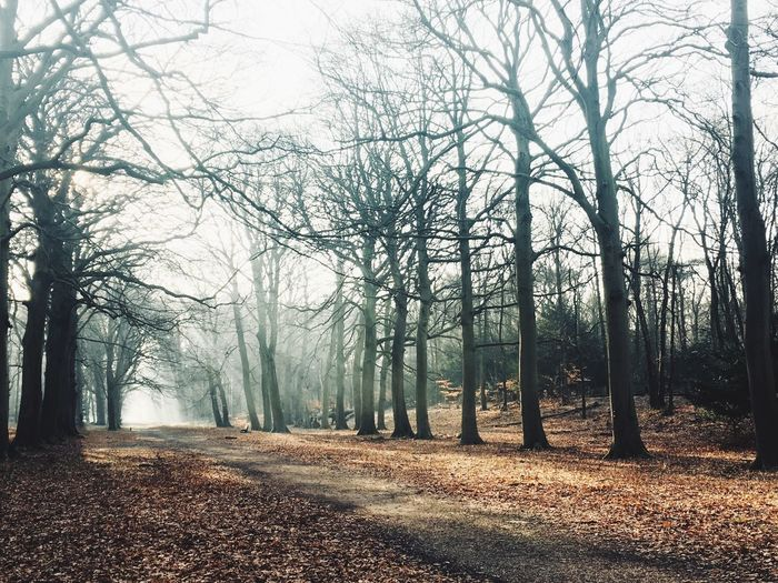 Sunrays Beautiful Winter Day Lovely Morning Walk! Sunday Walk Sunday Morning Forest Nature Beauty In Nature Scenics Tranquility Landscape Fog Tranquil Scene Winter