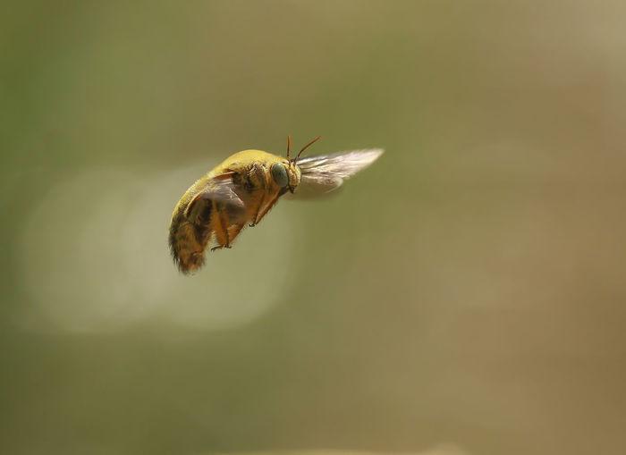 fly EyeEm
