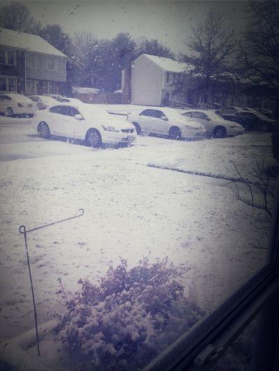 The snow thoe