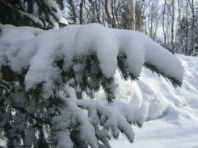 Snow. Tree Photography Day Nature Landscape Popular Sun Beautiful Snow Beauty In Nature