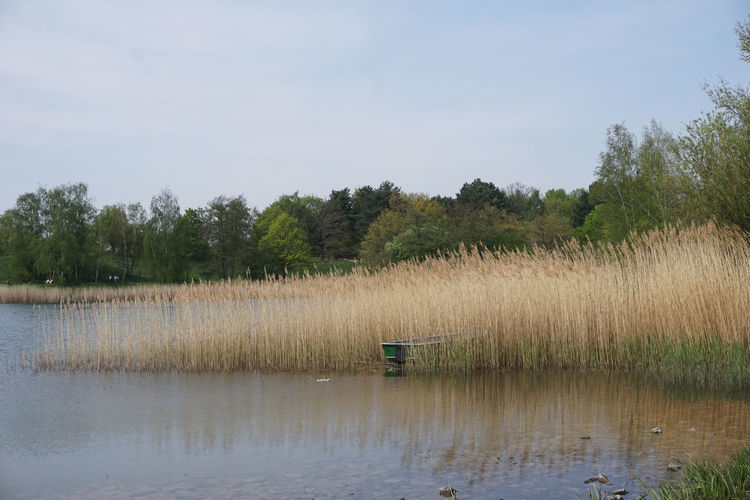 quiet day in Berlin Water Plant Tranquility Scenics - Nature Tree Lake Tranquil Scene Sky Beauty In Nature Day Growth Nature No People Non-urban Scene Waterfront Reflection Grass Remote Outdoors Swamp