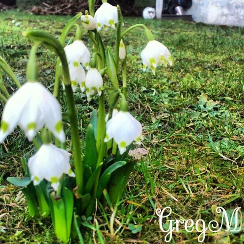 Flowers Open Kronce Nature green