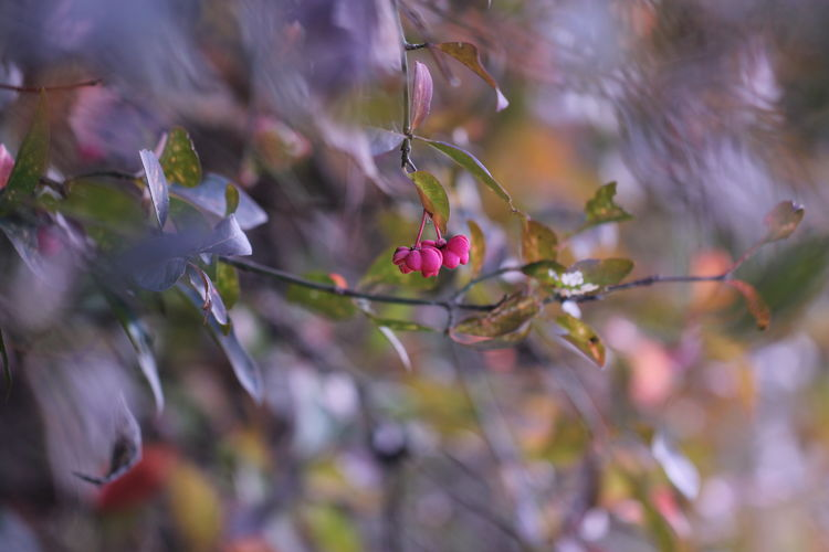 ? Bokeh Light Sun Sunlight Dreamy Poetry Wild Rural Branches Leaf Forest Wood Light And Shadow Green Leaves Macro Berry Flower Nature Plant No People Outdoors Red Day Close-up Closing Multi Colored Natural Parkland Beauty In Nature Tree