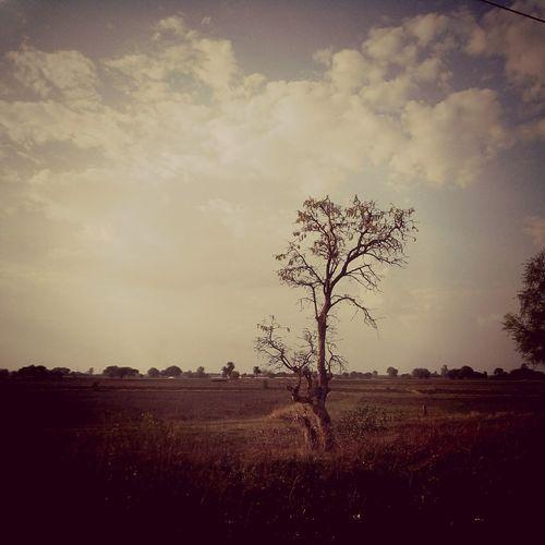 A mandatory pic. Sky Treetastic Vscocam Vscofilm Opernturm