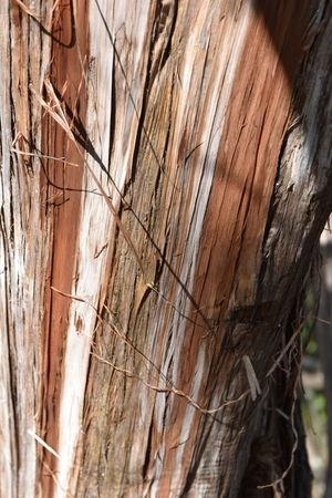 Hiking Macro Photography Textured  Tree Tree Bark Backgrounds Cedar Tree Close Up