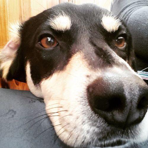 Musone peloso in versione Selfie Canino Vogliofareilmodello Nonsonobellopiaccio Nerone Nerocane Doggy Instadog Cane Miamor