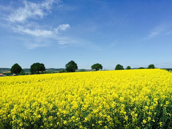 Beautiful may Enjoying Life Landscape_Collection Colorful Rapsfeld Fields Beautiful Day IPhoneography Travel Photography May Springtime