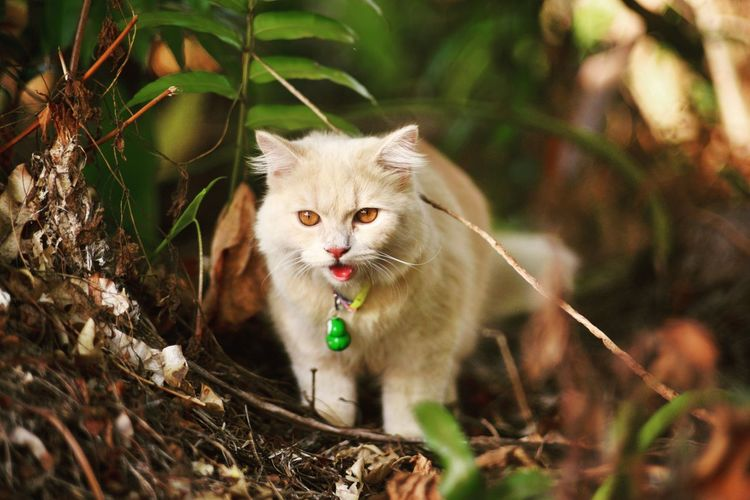 Beautiful cat in the jungle Nature Wildlife Cat Cats Of EyeEm Best Cat Ever Jungle Love Adventure Domestic Cat Feline Animal Mammal Pets Portrait One Animal Looking At Camera Whisker Protruding Domestic Animals Outdoors Animal Themes Day No People Nature
