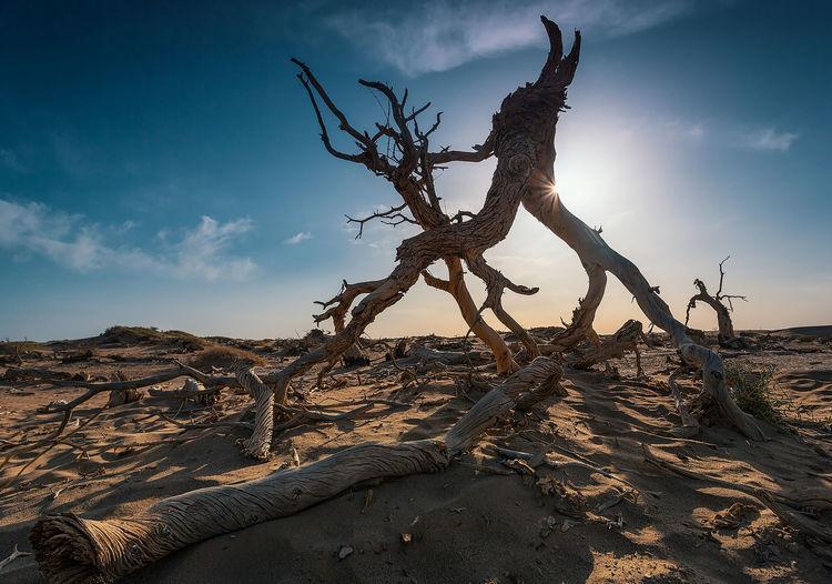 Driftwood on tree trunk in desert against sky