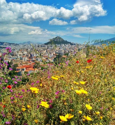 Mount Lycabetttus in Athens, Greece Mount Mount Lycabettus Lycabettus Athens Athens, Greece Greece Flowers Cityscape Capital Cities  Capital City Sightseeing Landmark Europe Travel Flower Day Outdoors Sky Mountain Landscape Scenics Plant Poppy Flowerbed