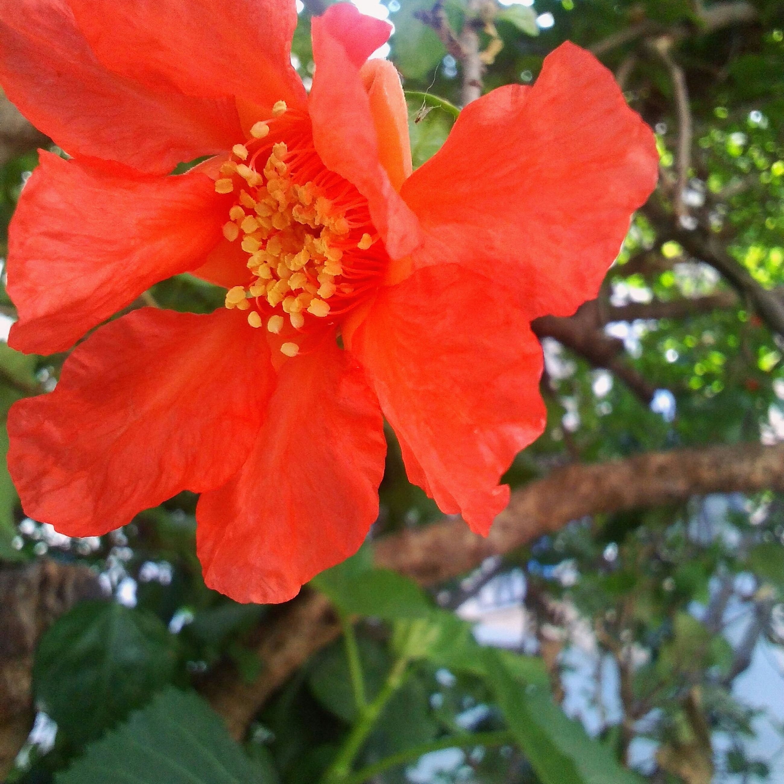 flower, freshness, petal, growth, fragility, red, flower head, beauty in nature, focus on foreground, close-up, nature, blooming, plant, leaf, stamen, in bloom, blossom, day, park - man made space, outdoors