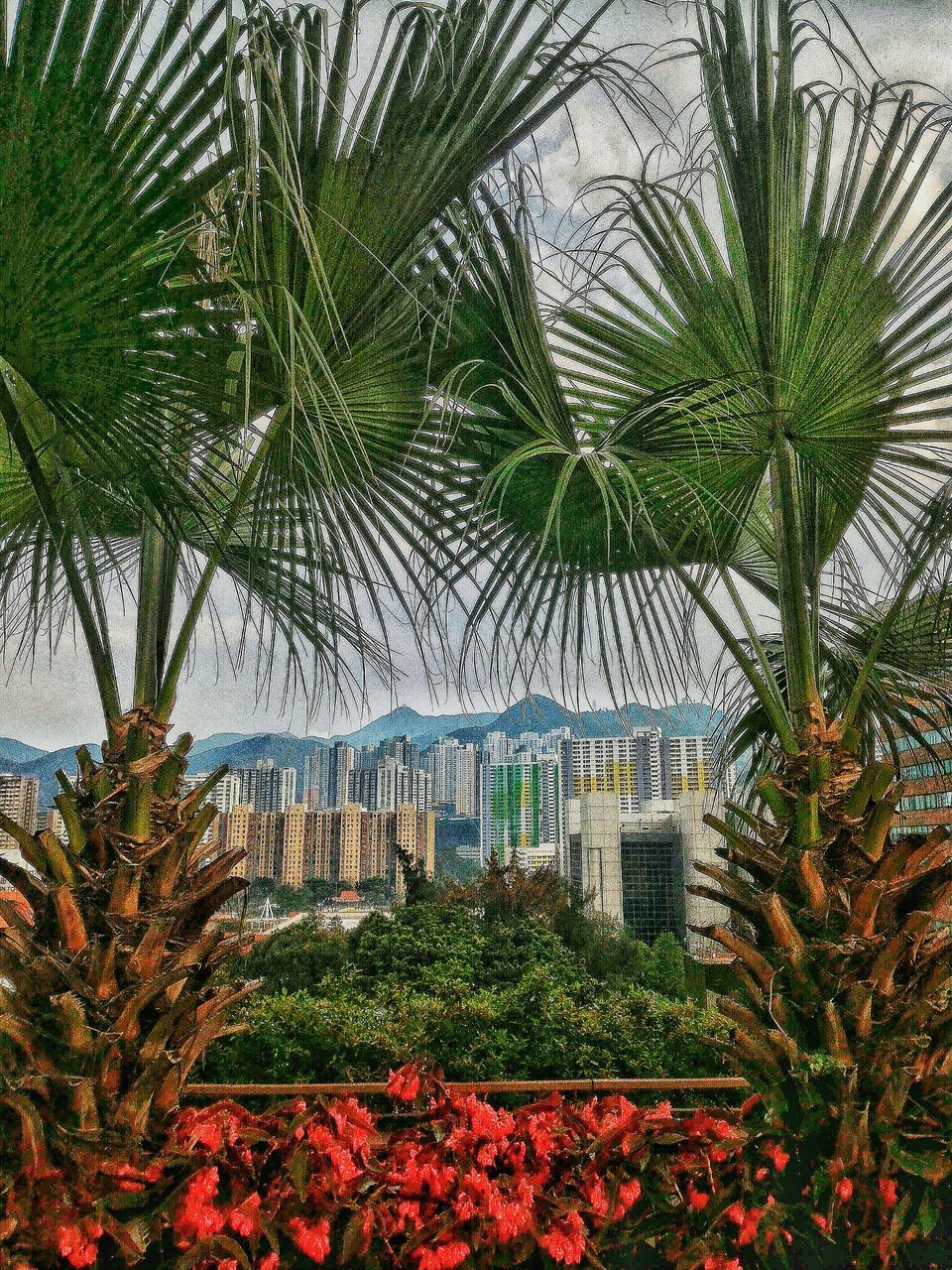 palm tree, tree, plant, growth, day, leaf, outdoors, tourist resort, no people, nature, flower, building exterior, travel destinations, vacations, scenics, architecture, built structure, beauty in nature, frond, greenhouse, sky, freshness, close-up