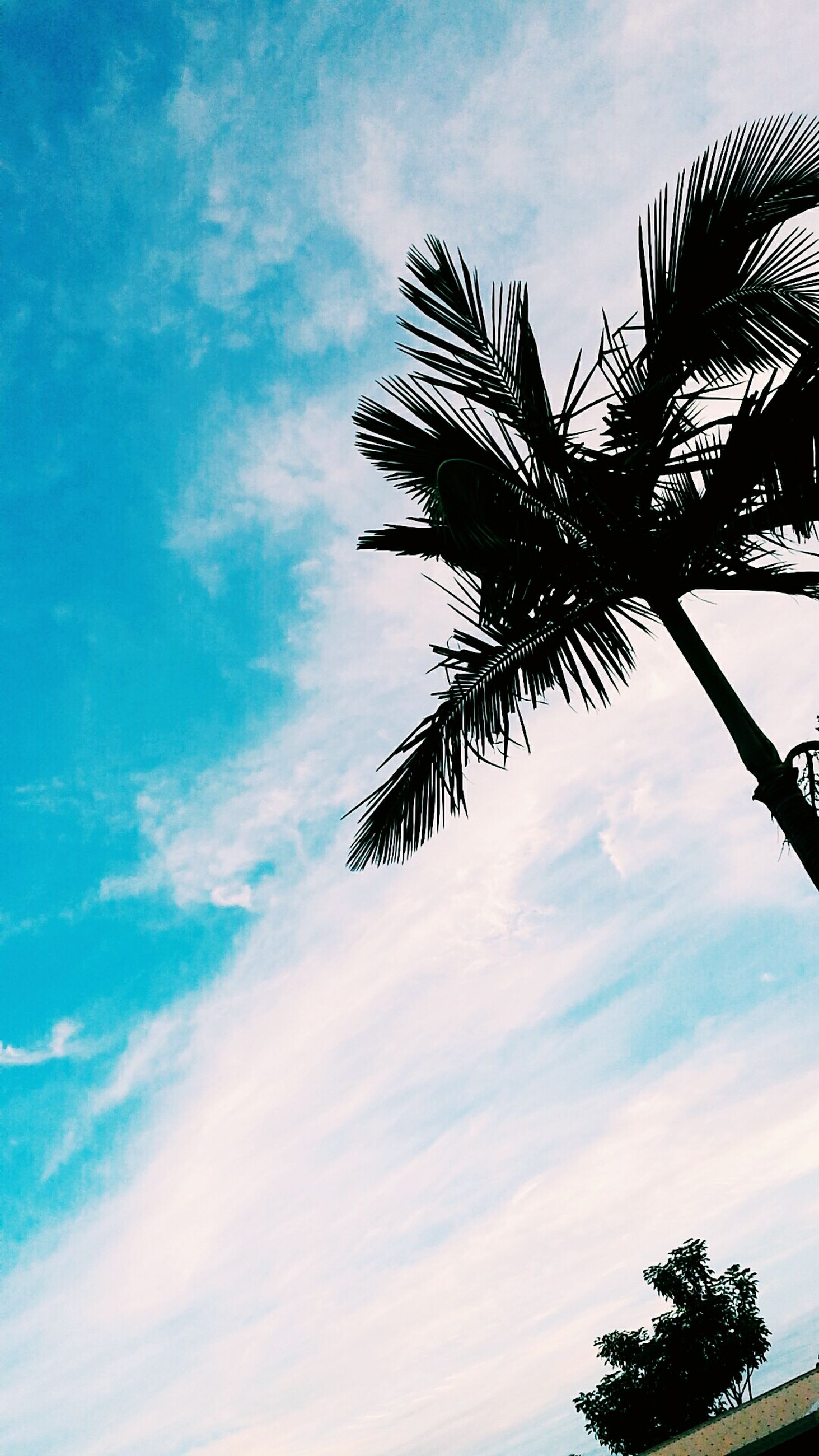 low angle view, palm tree, sky, tree, cloud - sky, silhouette, cloud, blue, tranquility, nature, growth, beauty in nature, cloudy, tree trunk, coconut palm tree, scenics, outdoors, palm leaf, no people, branch