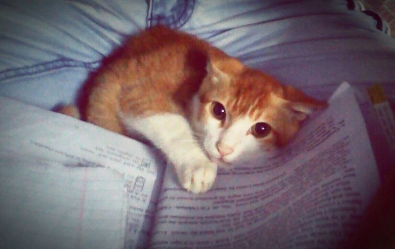 Everyday Education Photooftheday Cuteeee♥♡♥ Lovepet Mypet Pussycat Cute Pets