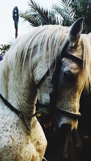 WAssem Horse Domestic Animals One Animal Animal Themes Mammal Day Outdoors