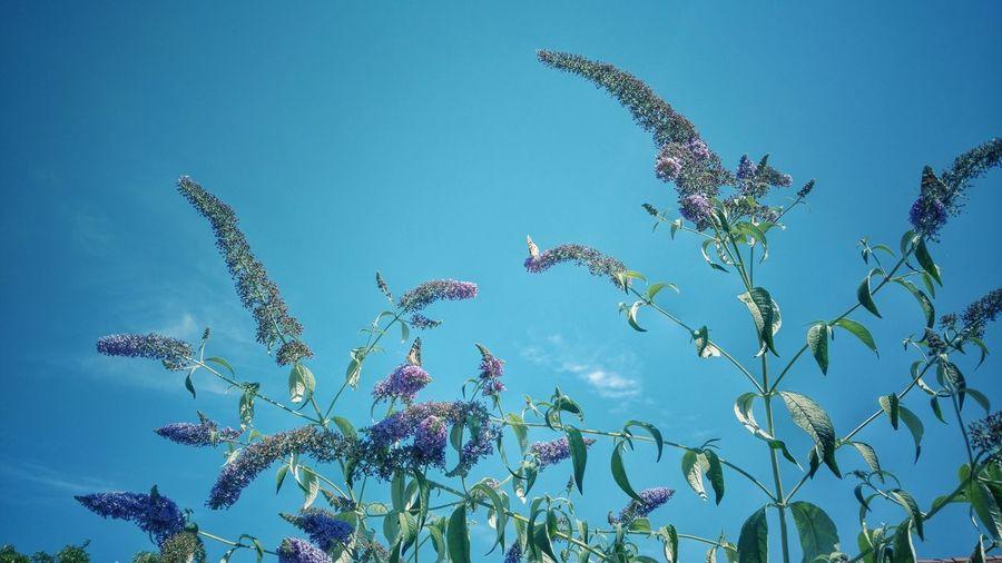 Flying Plant