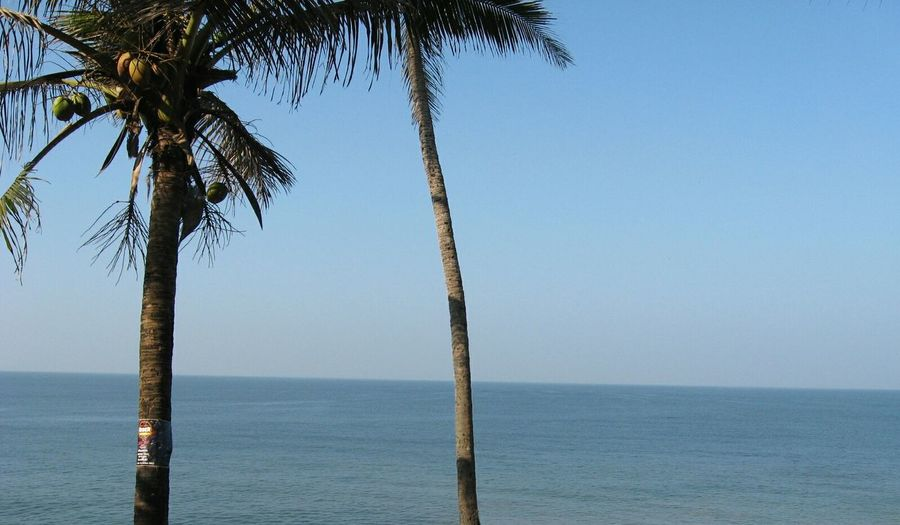 Palm Trees In Front Of Sea