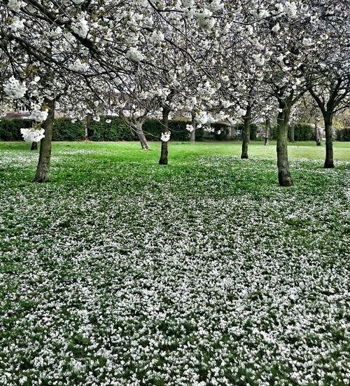 Springtime Blossom Outwithdog