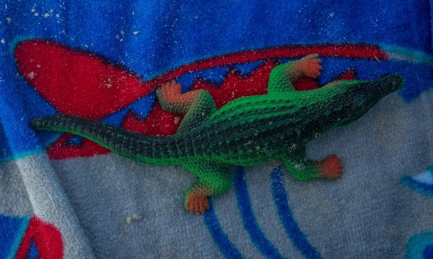 Alligator on Beach Towel Red Gray Grey Red, Blue And Green Colour Toy Kids Toy Alligator Crocodile Beach Beach Photography Vibrant Color Toy Animal Colorful Beach Towel Leisure Multi Colored Blue Backgrounds Full Frame Close-up Animal Representation
