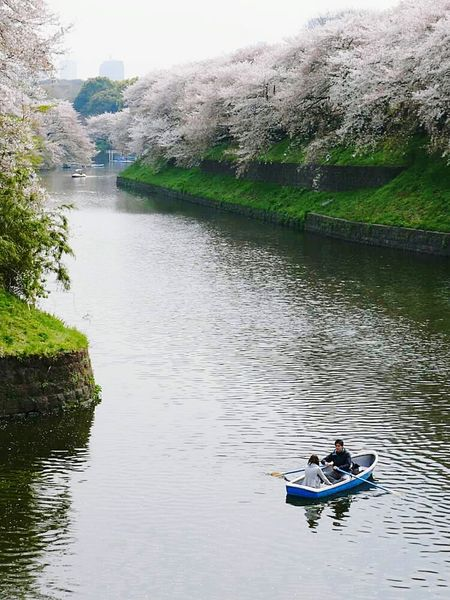 Tokyo Japan Cherry Blossoms River Row Boat Scenery Scenic Beautiful Travel Photography Trees Landscape Great Outdoors With Adobe