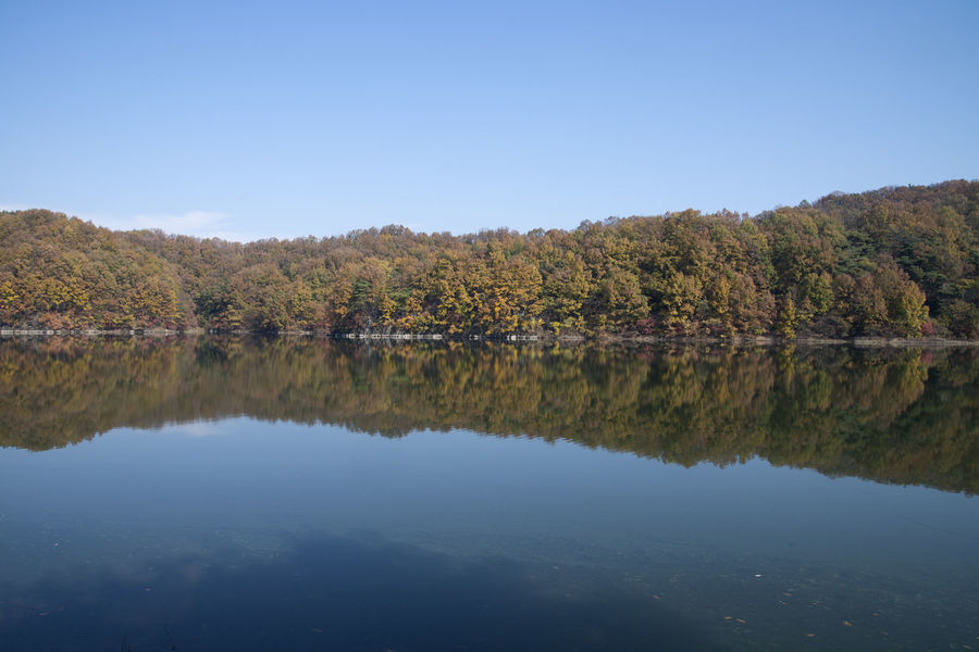 autumn landscape of Busodamak, a beautiful lake located in Okcheon, Chungbuk, South Korea Autumn Autumn Reflections Autumn Leaves Busodamak Okcheon Autumn Beauty In Nature Change Clear Sky Day Forest Growth Lake Lake In Autumn Lake In The Morning Lake Reflection Leaf Morning Lake Nature No People Outdoors Reflection Scenics Sky Tranquil Scene Tranquility Tree Water Waterfront