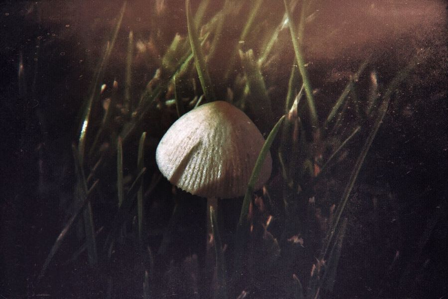It's the little things in Life Mushrooms 🍄🍄 Macro Photography Sony A6000 Holgalens Mextures Digitalphotography