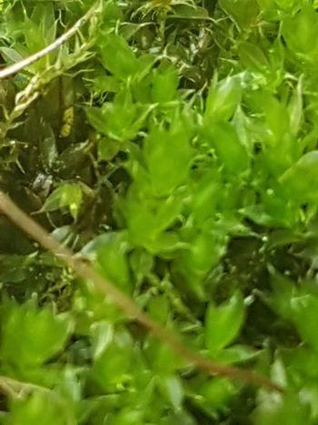 Moos Defocused Full Frame Backgrounds Leaf Close-up Plant Green Color