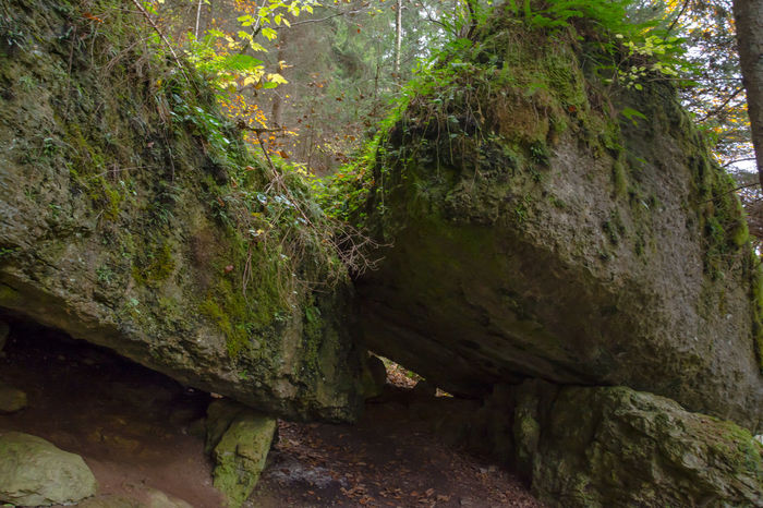 hiking trail through rocks - Pottenstein, Germany Bavaria EyeEm Nature Lover Forrest Photography Nikon Wanderlust Betterlandscapes Day Forrest Franconianswitzerland Germany Hiking Trail Hikingadventures Moss Nature No People Outdoors Rocks