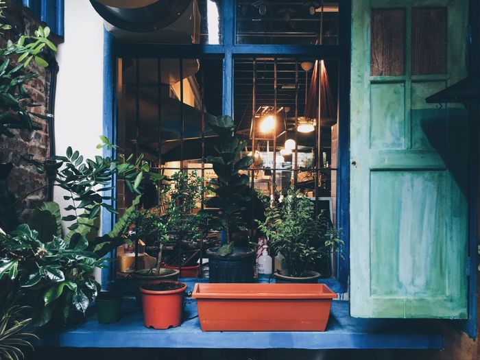 Plants Plant Nature Flowers Greens Window Windows Cafe Davesdeli Cafés Plants And Flowers Nature_collection EyeEm Nature Lover Naturelovers