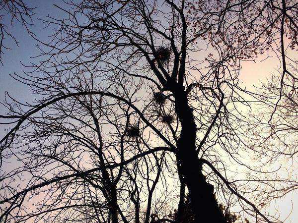 Tree Bare Tree Sky Branch Nature Low Angle View No People Beauty In Nature Silhouette Tranquility Outdoors Sunset Tranquil Scene Scenics Day