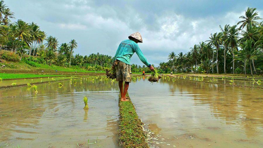 Bali - AntasiraBali Jeanmart Bali 16:9 Ricefields Antasira Verybalitrip Very Bali Trip
