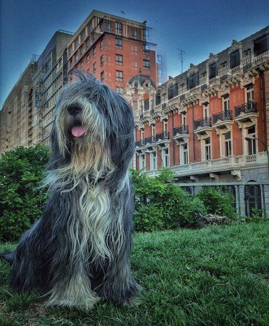 Mai posando Dogs Eye4photography
