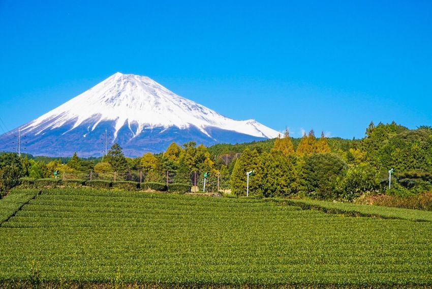 Scenics Tranquil Scene Beauty In Nature Nature Blue Mountain Tranquility Landscape Field No People Clear Sky Day Outdoors Growth Green Color Tree Sky Grass Fujimountain Fujisan Mtfuji Sony Sony A5000