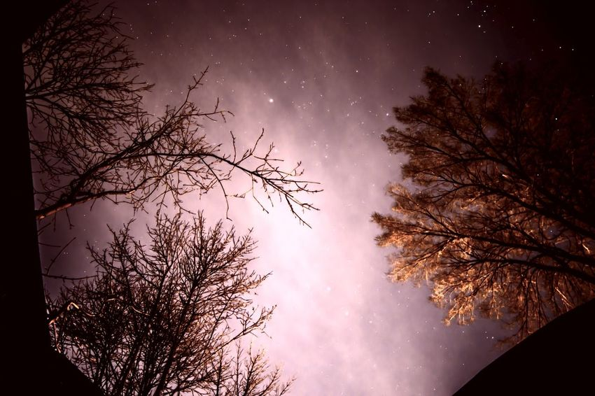 Winter night sky Abstract Sky Trees Reaching Natural Beauty Backgrounds December Winter Solstice Winter Tree Sky Beauty In Nature Star - Space Plant Astronomy Scenics - Nature Tranquility Silhouette Nature Night Tranquil Scene Low Angle View Star Space No People Star Field Growth Branch Galaxy Capture Tomorrow