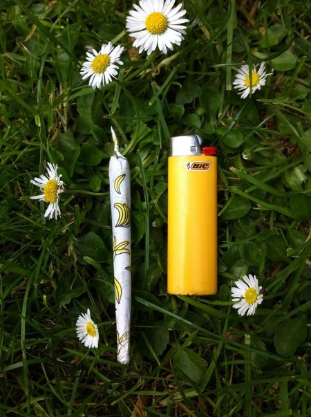 Yellow Weed Nature Enjoying Life Spliff