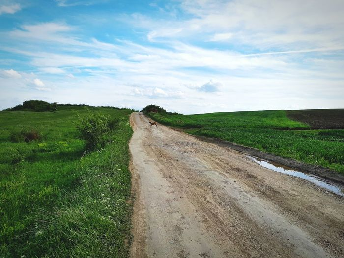Empty dirt road amidst agricultural field against sky