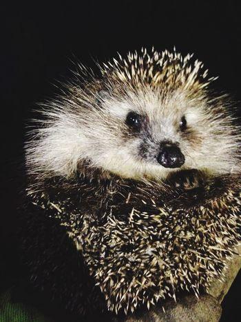 Hedgehog Nature Weekend EyeEm